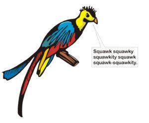 parrot_squawk